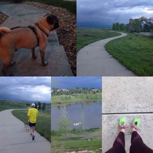 Last workout of the day done! Lots of wildlife out, pelicans, great blue heron, bunnies and one wild pug #IMTraining #IMCanada #WinstonThePug #ironpug