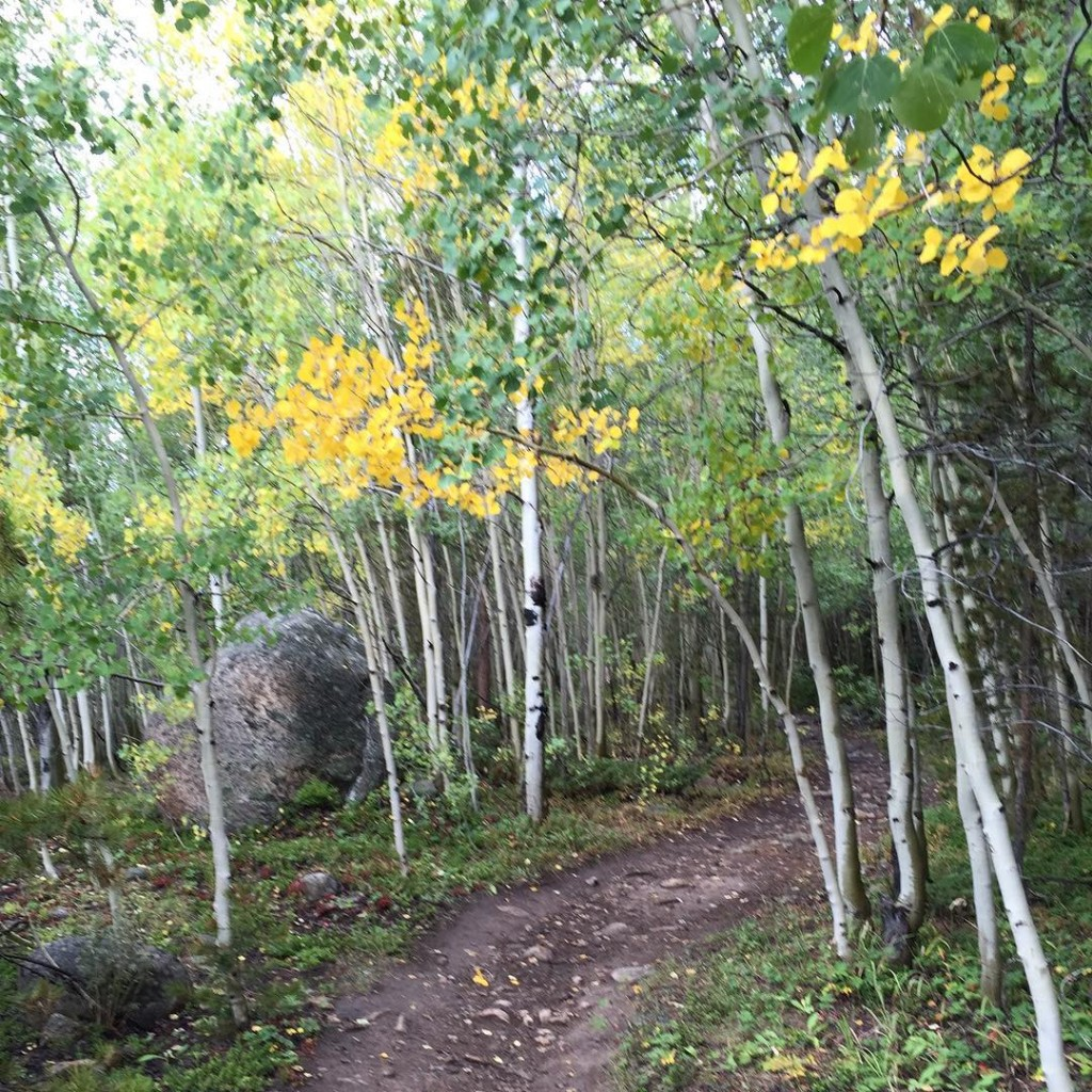 Enjoying some early fall scenery in the high country #Leadville #TrailRun