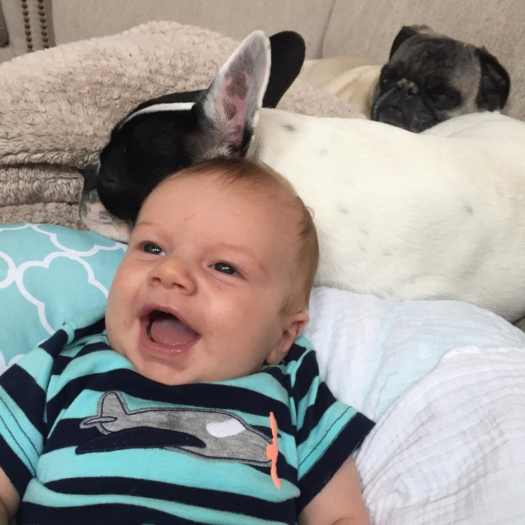 Cannon loves hanging with his brothers ❤️❤️ #pug #frenchie #cmcn