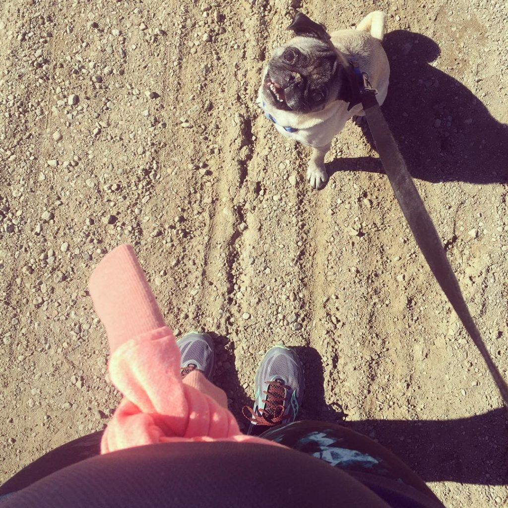 The pug took the me and the bump for a run this morning #winstonthepug #happyplace #29weekspregnant #run #runish